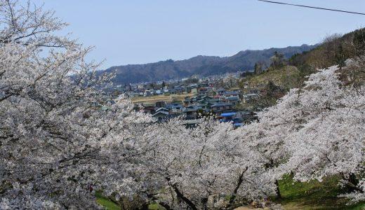 烏帽子山公園 観光レポ|昼も夜も千本桜を楽しもう!
