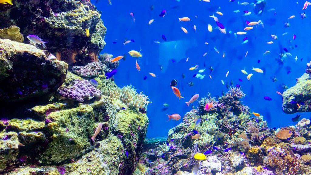 仙台うみの杜水族館の南の海の魚