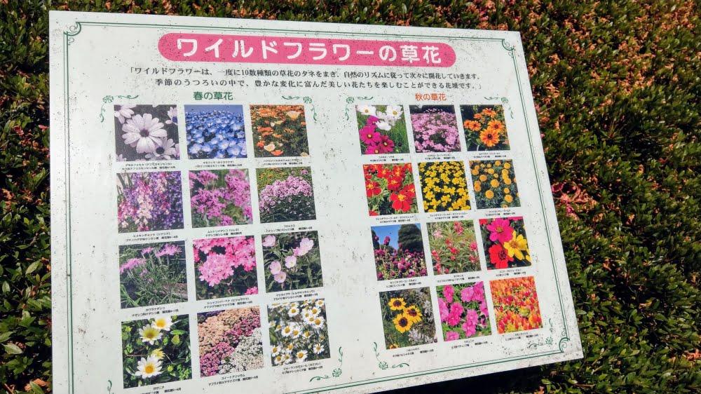 石橋文化センターの花の種類