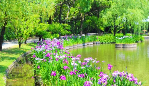 紫陽花と花菖蒲が見頃!久留米市の石橋文化センターに行ってきたよ!