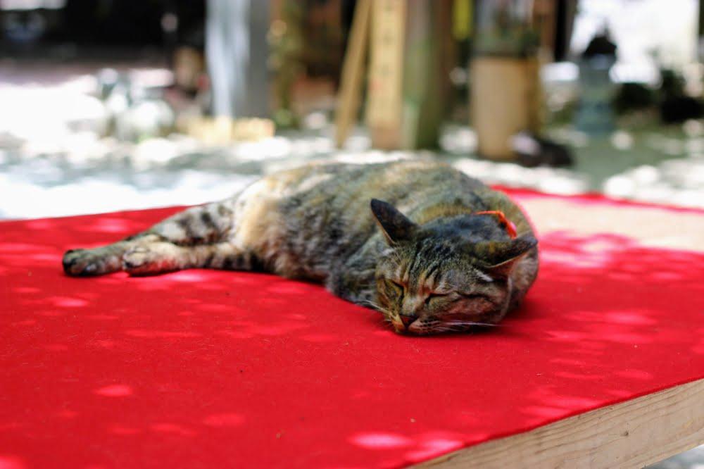 かえる寺の猫
