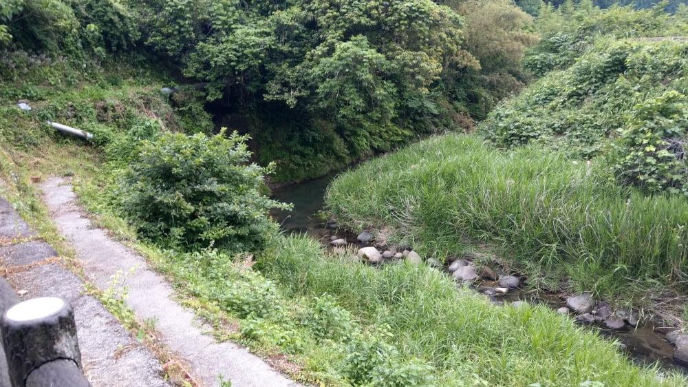 ホタルが見える小塩地区の川