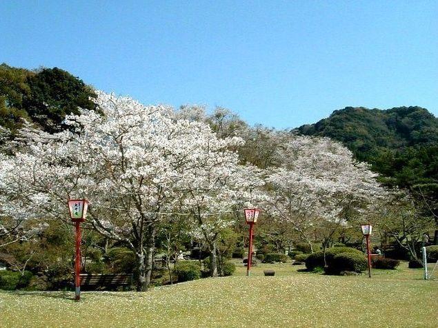 西渓公園の桜