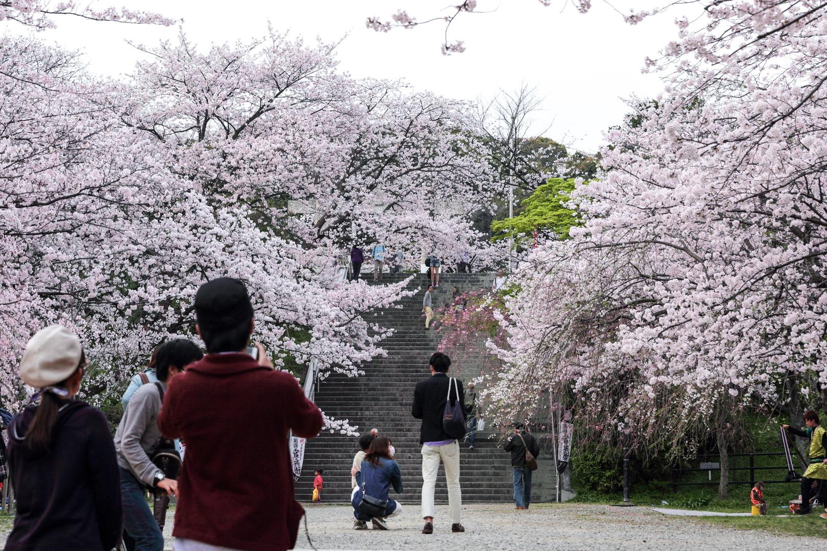 西公園 桜