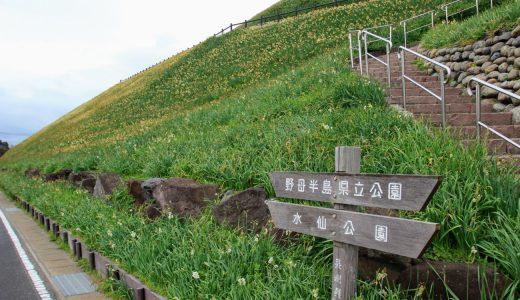 【観光レポ】1,000万本の水仙を野母崎に見に行こう!