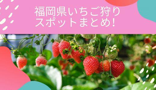 【2020年版】福岡県いちご狩りスポットに行く前にチェック!開園時期や農園の特徴と比較