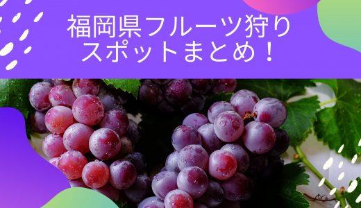 【2020年秋】福岡のフルーツ狩りまとめ!ぶどう・梨・柿など