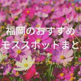 福岡 コスモスまとめ