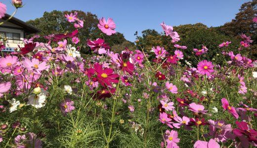【福岡市植物園】美しいお花に囲まれ至福の一息!