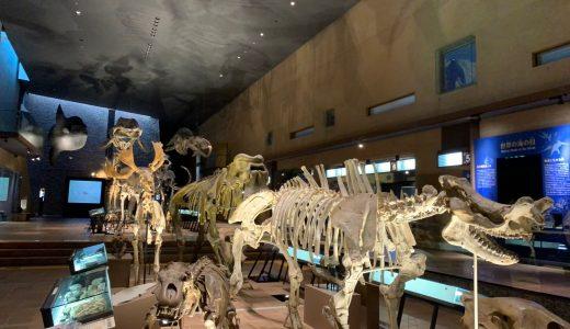まるで巨大な図鑑!?いのちのたび博物館で生命の神秘に触れる!